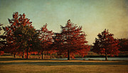 Russet Prints - Autumn in the Park Print by Lisa Holmgreen