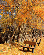 Park Benches Framed Prints - Autumn In The Park Framed Print by Lydia Warner Miller