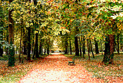 France Photo Originals - Autumn in the Park by Nancy Mueller