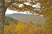Fall Colors Autumn Colors Framed Prints - Autumn in the Smokies Framed Print by Michael Peychich