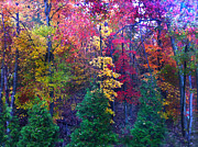 Reds Of Autumn Photo Posters - Autumn in Virginia Poster by Nabila Khanam