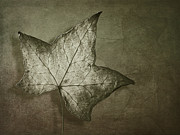 Fallen Leaf Photo Posters - Autumn Poster by Jan Pudney