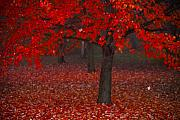 Red Maple Tree Prints - Autumn Print by Jane Melgaard