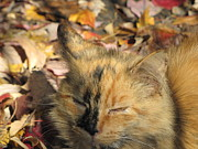 Blending Photos - Autumn Kitty by Laurie Riley