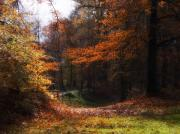 Red Autumn Posters - Autumn Landscape Poster by Artecco Fine Art Photography - Photograph by Nadja Drieling