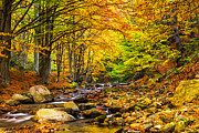 Autumn Landscape Photo Metal Prints - Autumn Landscape Metal Print by Evgeni Dinev