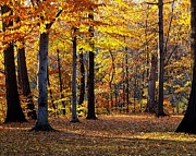 Masterpiece Prints - Autumn Landscape Print by Robert Harmon