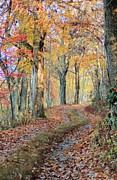 Country Lanes Photo Prints - Autumn Lane Print by Heavens View Photography