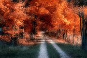 Woods Photo Metal Prints - Autumn Lane Metal Print by Tom Mc Nemar