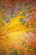 Aging Posters - Autumn Leaf Abstract Poster by Tara Turner