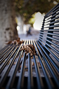 Bench Photo Metal Prints - Autumn Leaf Metal Print by Joana Kruse