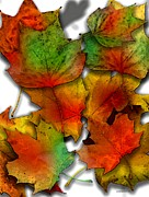 Effect Photos - Autumn Leaf by Mario  Perez