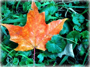 Fish Artwork - Autumn Leaf by Miss Dawn