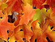 Fallen Leaf Photo Originals - Autumn Leaves - Foliage by Dmitriy Margolin