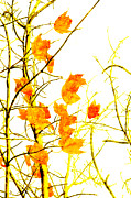 Yellow Leaves Mixed Media Posters - Autumn Leaves Abstract Poster by Andee Photography