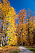 Fall Leaves Posters - Autumn Leaves Poster by Anthony Citro
