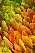 Leaves Photo Posters - Autumn leaves arrangement Poster by Elena Elisseeva