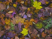 Fall Digital Art Originals - Autumn Leaves at Side of Road by John Hansen