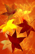 Carol And Mike Werner Prints - Autumn leaves Print by Carol and Mike Werner