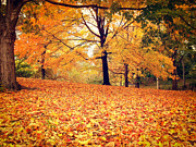 Autumn Leaves - Central Park - New York City Print by Vivienne Gucwa