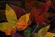 Layered Framed Prints - Autumn Leaves Collage Framed Print by Bonnie Bruno