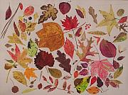 Fall Leaves Drawings Framed Prints - Autumn Leaves Framed Print by Diane Frick