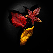 Autumn Leaves Print by Gerlinde Keating - Keating Associates Inc
