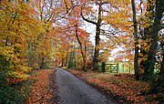 Country Lanes Prints - Autumn Leaves Print by Harold Nuttall