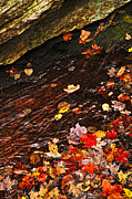 Rushing Photo Prints - Autumn leaves in river Print by Elena Elisseeva
