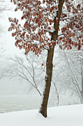 Blowing Snow Prints - Autumn Leaves in Winter Snow Storm Print by John Stephens