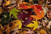 Striking Photography Prints - Autumn Leaves Print by James Bo Insogna