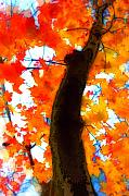 Fall Foliage Digital Art - Autumn Leaves by Jeff Breiman
