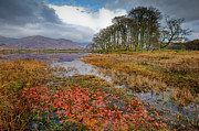 Argyll And Bute Prints - Autumn leaves Loch Awe Print by Gary Eason