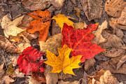 Matt Dobson - Autumn Leaves