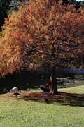 Noel Elliot - Autumn Leaves
