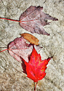 Autumn Prints Prints - Autumn Leaves on a Rock I Print by Dan Carmichael