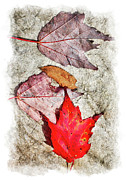 Autumn Prints Prints - Autumn Leaves on a Rock II Print by Dan Carmichael