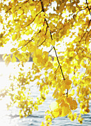 Autumn Leaf On Water Metal Prints - Autumn Leaves On Branch With Lake In Background, Close-up Metal Print by Johner Images