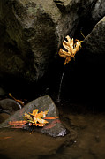 Fallen Leaf Photo Posters - Autumn Leaves Portrait Poster by Matt Tilghman