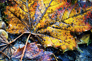 Fall Grass Prints - Autumn leaves Print by Sami Sarkis