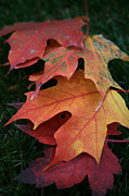 Color Change Posters - Autumn Leaves Poster by Timothy Johnson