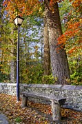 Benches Photos - Autumn Light by Benanne Stiens
