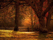 Elms Prints - Autumn Light Through the Trees Print by Maureen Maliha