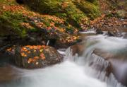 Waterfall Photos - Autumn Litter by Mike  Dawson