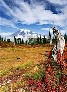 Mt Rainier Framed Prints - Autumn Majesty Framed Print by Mike  Dawson