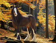 Equine Digital Art Posters - Autumn Majesty Poster by Terry Kirkland Cook