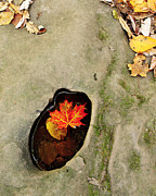 Puddle Acrylic Prints - Autumn Maple Leaf Acrylic Print by Matt Tilghman