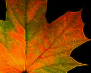 Warm Digital Art - Autumn Maple Leaf by Wingsdomain Art and Photography