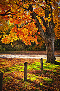 Old Wooden Fence Posts Prints - Autumn maple tree near road Print by Elena Elisseeva