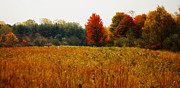 Fall Colors Autumn Colors Posters - Autumn Meadow Poster by Scott Hovind